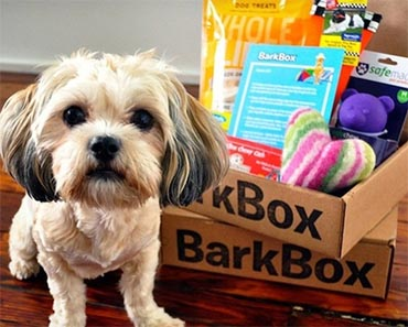 win a bark box subscription