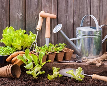 Gardening Must-Haves