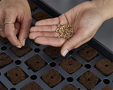 Root Farm 10101-10084 Seed Germination Kit